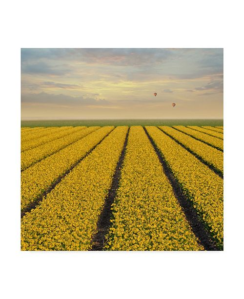 "Trademark Global Cora Niele 'Daffodil Fields' Canvas Art - 35"" x 35"" x 2"""