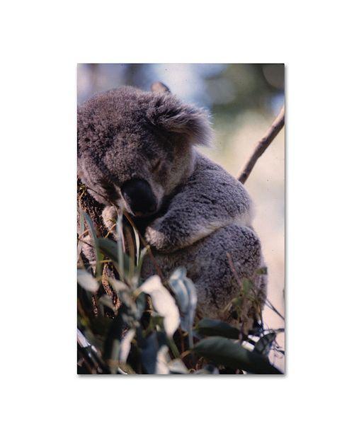 "Trademark Global Robert K Jones 'Koala-z' Canvas Art - 32"" x 22"" x 2"""