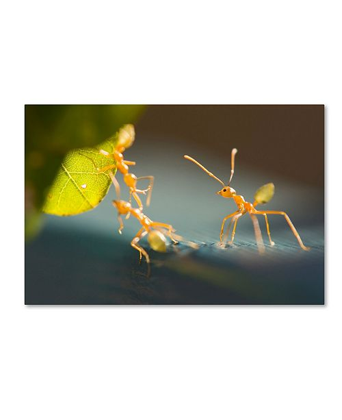 """Trademark Global Robert Harding Picture Library 'Yellow Ants' Canvas Art - 24"""" x 16"""" x 2"""""""