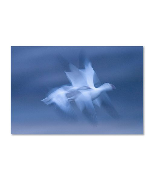 "Trademark Global Robert Harding Picture Library 'Blurred Bird' Canvas Art - 32"" x 22"" x 2"""