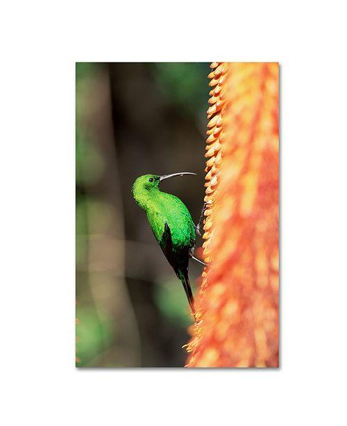 "Trademark Global Robert Harding Picture Library 'Small Green Bird' Canvas Art - 32"" x 22"" x 2"""