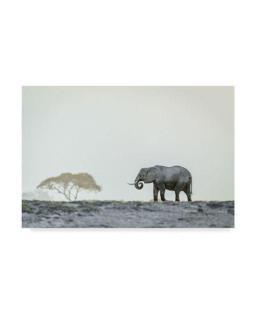 "Trademark Global Jeffrey C. Sink 'Monochromatic Color' Canvas Art - 47"" x 30"" x 2"""