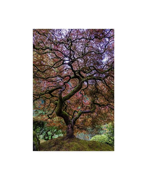 "Trademark Global Mike Centioli 'Japanese Maple Tree' Canvas Art - 24"" x 16"" x 2"""