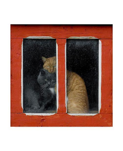 "Trademark Global Mihnea Turcu 'Love Cats' Canvas Art - 24"" x 2"" x 24"""