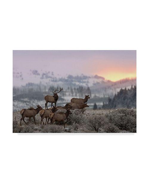 """Trademark Global Nick Kalathas 'First Light Deer' Canvas Art - 24"""" x 2"""" x 16"""""""