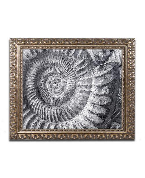 """Trademark Global Moises Levy 'Amonita 1' Ornate Framed Art - 14"""" x 11"""" x 0.5"""""""