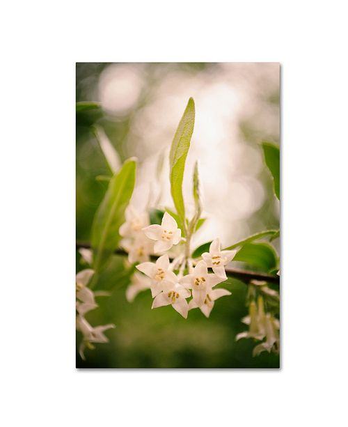 """Trademark Global PIPA Fine Art 'Floral Tranquility' Canvas Art - 12"""" x 19"""""""