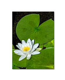 "Kurt Shaffer 'White Lotus' Canvas Art - 14"" x 19"""