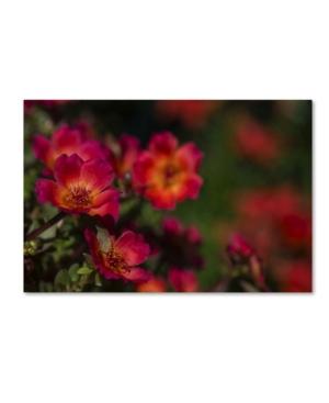 """Kurt Shaffer 'beauty Of Summer Blooms Red' Canvas Art - 16"""" X 24"""""""