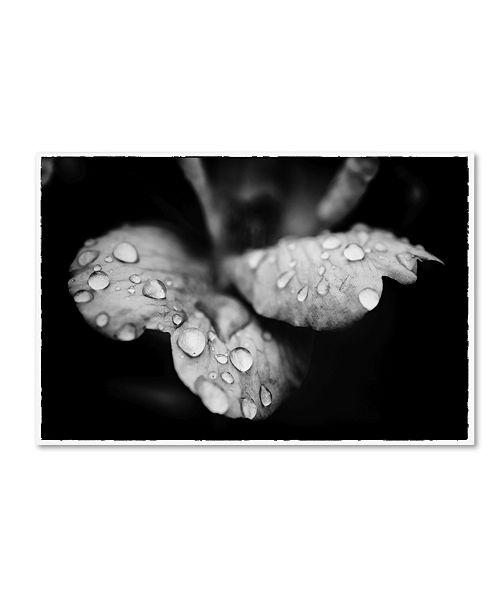 "Trademark Global PIPA Fine Art 'Raindrops on Wild Rose' Canvas Art - 16"" x 24"""