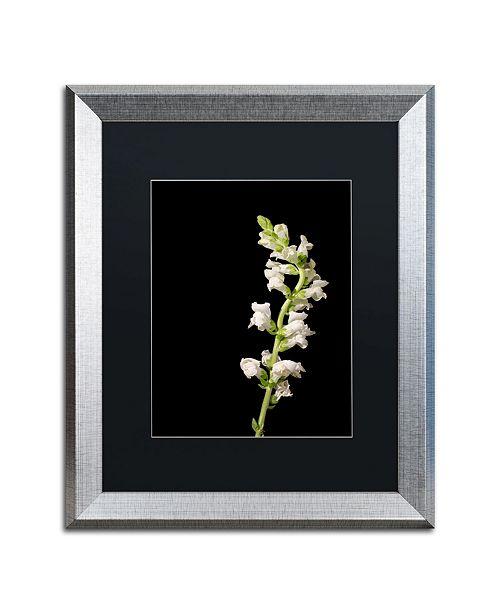 """Trademark Global PIPA Fine Art 'White Snapdragons' Matted Framed Art - 16"""" x 20"""""""