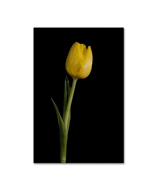 "Trademark Global PIPA Fine Art 'Yellow Tulip Black Background 5' Canvas Art - 16"" x 24"""