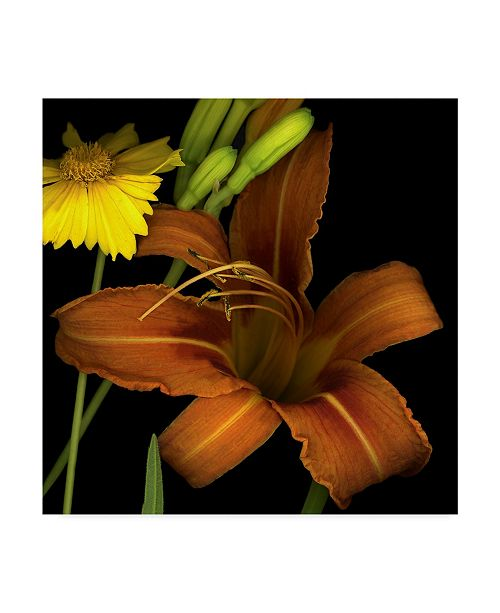 "Trademark Global Susan S. Barmon 'Day Lily' Canvas Art - 18"" x 18"""