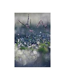 "Incredi 'Macro Wonderworld' Canvas Art - 12"" x 19"""
