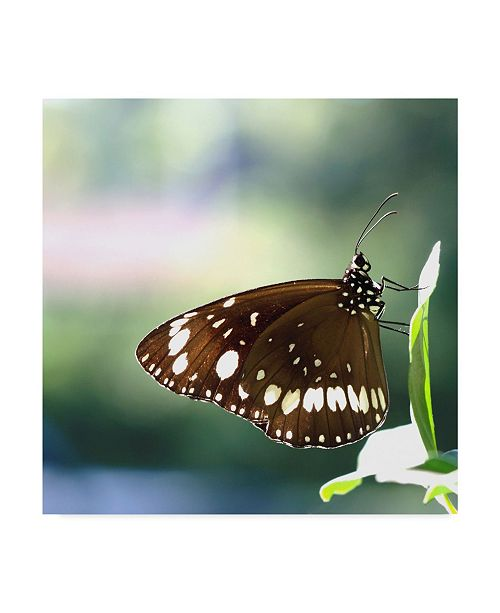 "Trademark Global Incredi 'Brown Butterfly' Canvas Art - 18"" x 18"""