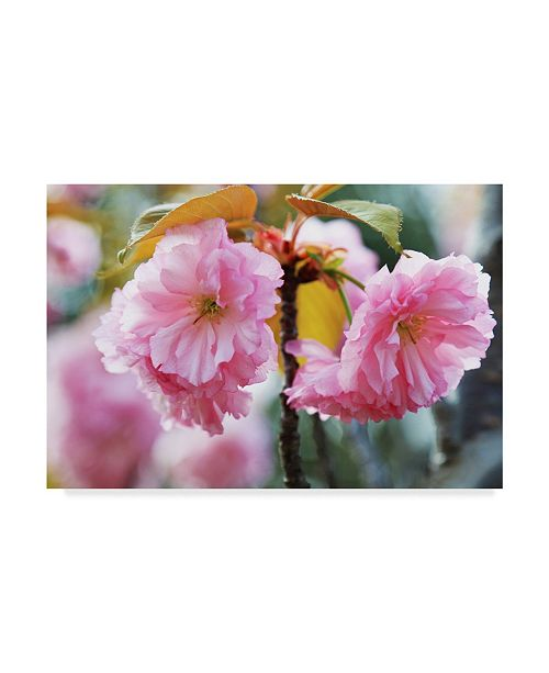 """Trademark Global Incredi 'Two Pink Flowers' Canvas Art - 19"""" x 12"""""""