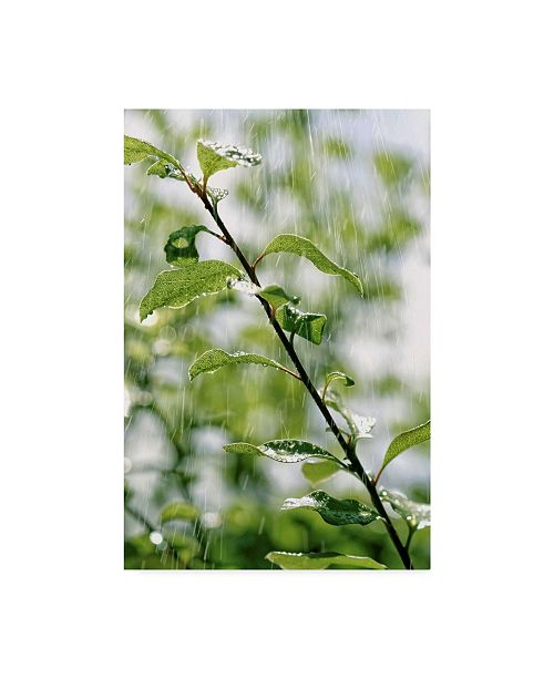 "Trademark Global Incredi 'Plants In Rain' Canvas Art - 16"" x 24"""