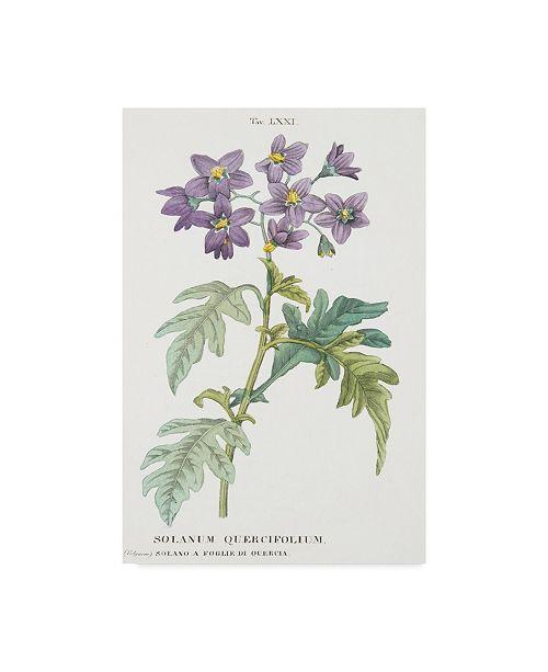"Trademark Global Italian School 'Solanum Quercifolium' Canvas Art - 16"" x 24"""