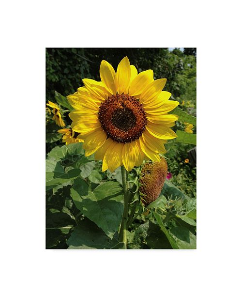 "Trademark Global Nina Marie 'Sunny Day Sunflower' Canvas Art - 14"" x 19"""