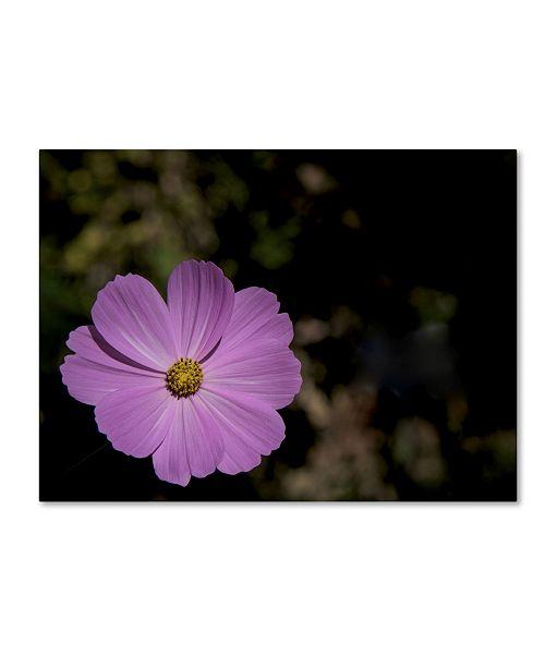 """Trademark Global Kurt Shaffer 'Pink Cosmos Flower' Canvas Art - 18"""" x 24"""""""