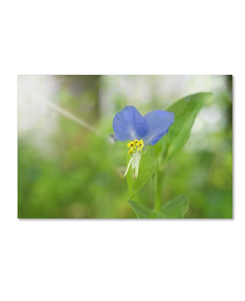 "Trademark Global PIPA Fine Art 'Asiatic Dayflower' Canvas Art - 22"" x 32"""