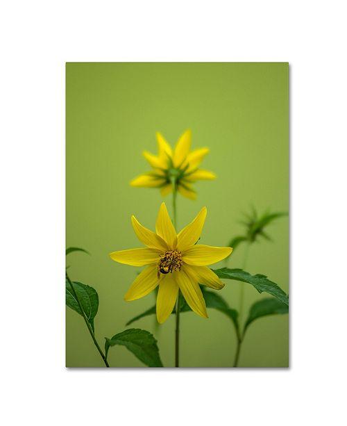 "Trademark Global Kurt Shaffer 'Bumblebee Yellow Daisy' Canvas Art - 24"" x 32"""