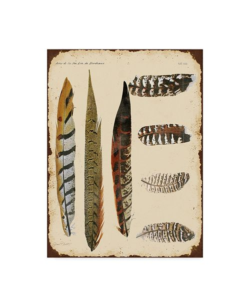 "Trademark Global Jean Plout 'Feather Study' Canvas Art - 24"" x 32"""