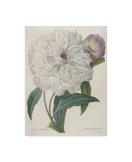 "Trademark Global Pierre-Joseph Redoute 'Paeonia Flagrans Peony' Canvas Art - 24"" x 32"""