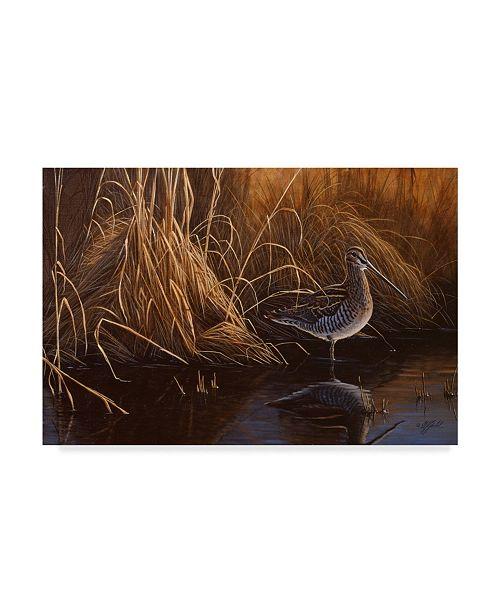 "Trademark Global Wilhelm Goebel 'Evening Light Snipe' Canvas Art - 22"" x 32"""