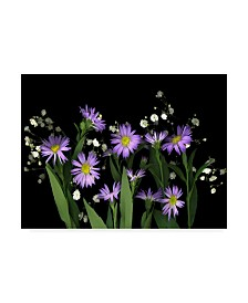 """Susan S. Barmon 'Asters And Babys Breath' Canvas Art - 35"""" x 47"""""""