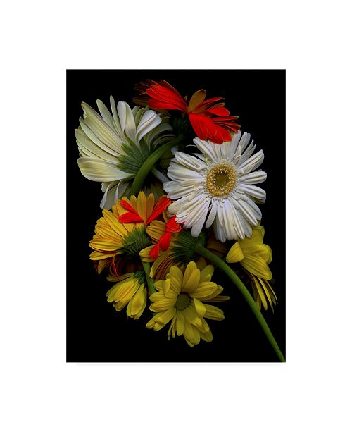 "Trademark Global Susan S. Barmon 'Daisies' Canvas Art - 24"" x 32"""
