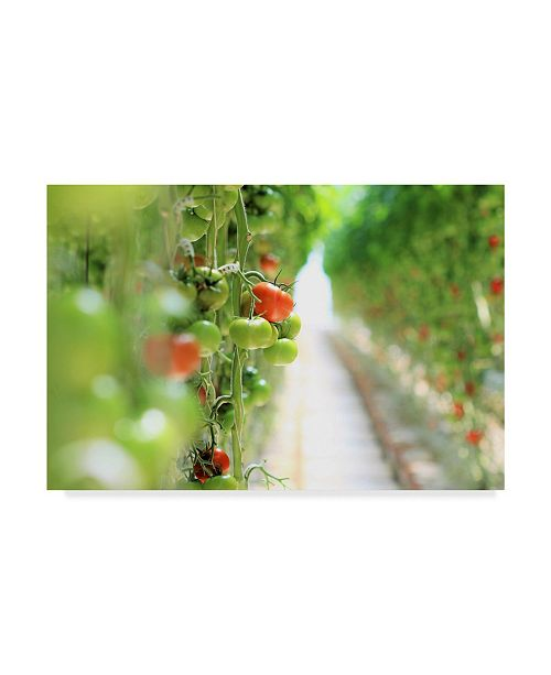 "Trademark Global Incredi 'Tomato Red Green' Canvas Art - 47"" x 30"""