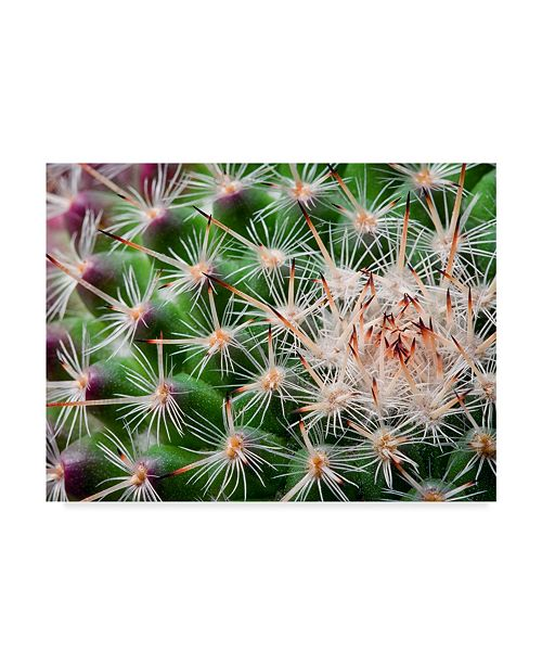 "Trademark Global Janice Sullivan 'Cactus Spines' Canvas Art - 47"" x 35"""