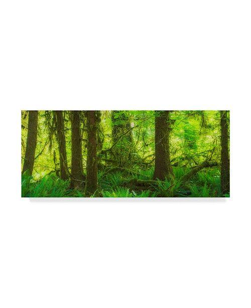 """Trademark Global Jason Matias 'Rainforest Green' Canvas Art - 32"""" x 14"""""""