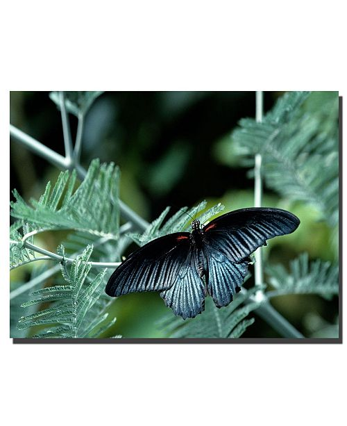 "Trademark Global Tropical Butterfly by Kurt shaffer Canvas Art - 32"" x 24"""