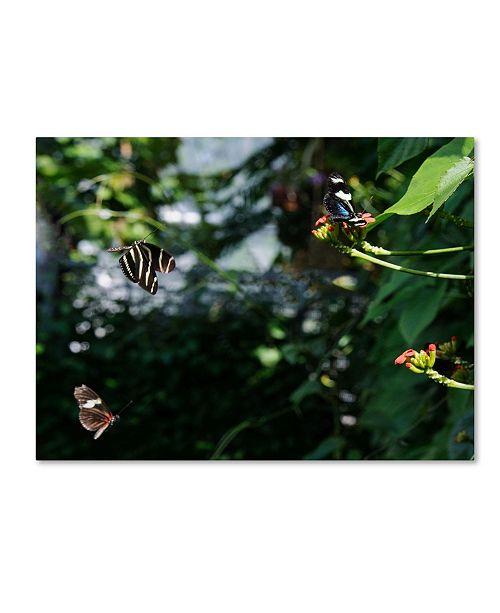 """Trademark Global Kurt Shaffer 'Butterflies in Flight' Canvas Art - 35"""" x 47"""""""