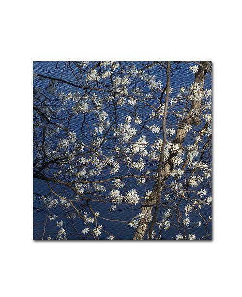 "Trademark Global Kurt Shaffer 'Springtime at the Lake' Canvas Art - 24"" x 24"""