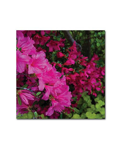 "Trademark Global Kurt Shaffer 'Pink and Red Azalea Flowers' Canvas Art - 14"" x 14"""