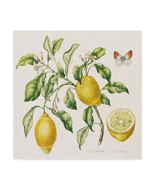 "Trademark Global Janneke Brinkman-Salentijn 'Lemon Bouquet' Canvas Art - 14"" x 14"""