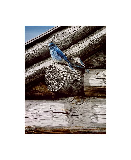 """Trademark Global Ron Parker 'Weathered Wood' Canvas Art - 14"""" x 19"""""""
