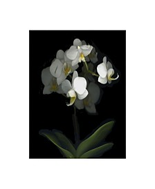 "Susan S. Barmon 'Mini White Orchids' Canvas Art - 14"" x 19"""