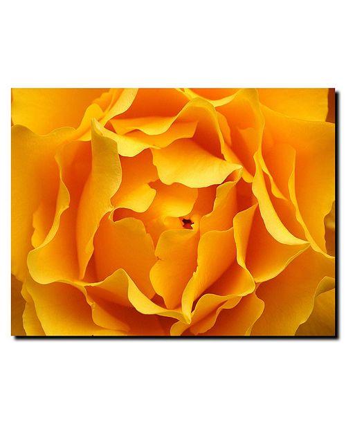 "Trademark Global Hypnotic Yellow Rose by Kurt Shaffer Canvas Art - 24"" x 18"""