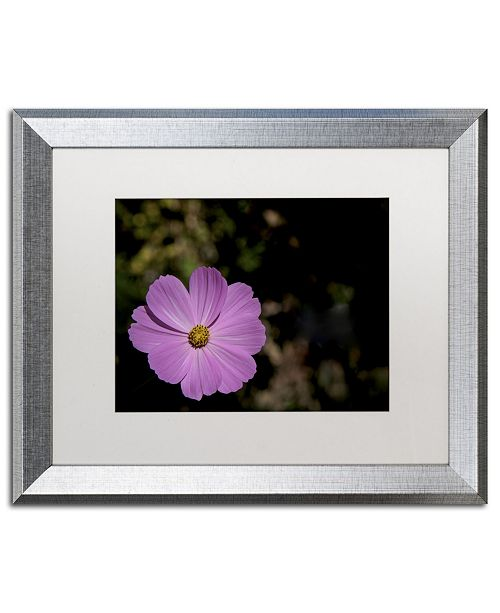 "Trademark Global Kurt Shaffer 'Pink Cosmos Flower' Matted Framed Art - 16"" x 20"""