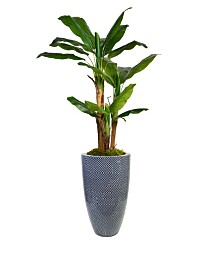 "Laura Ashley 81.5"" Banana Tree Faux decor with Burlap Kit in Resin Planter"