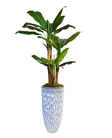 "Laura Ashley 79.5"" Banana Tree Faux decor with Burlap Kit in Resin Planter"
