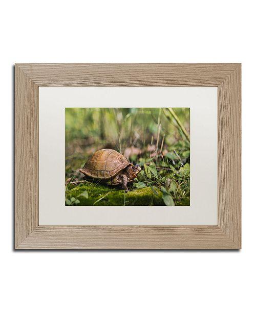 "Trademark Global Jason Shaffer 'Box Turtle' Matted Framed Art - 14"" x 11"""