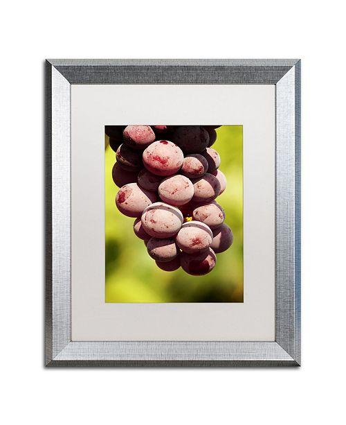 """Trademark Global Jason Shaffer 'Homegrown Grapes' Matted Framed Art - 16"""" x 20"""""""
