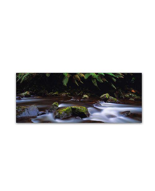 """Trademark Global David Evans 'Cascade-Otways Victoria' Canvas Art - 32"""" x 10"""""""