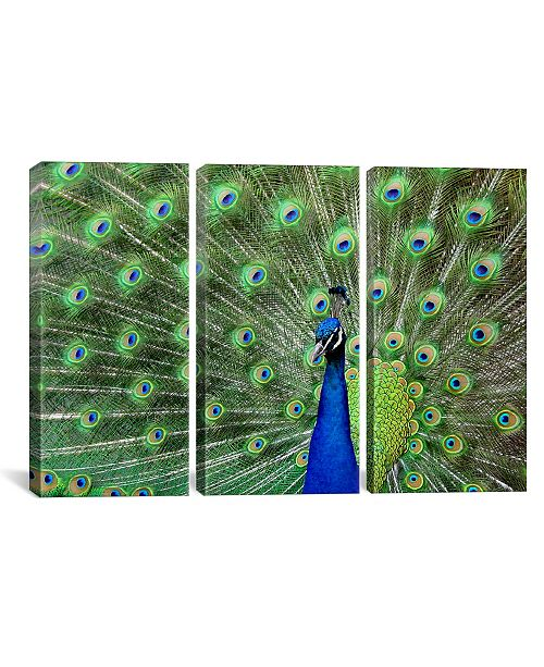 """iCanvas Peacock Feathers Gallery-Wrapped Canvas Print - 40"""" x 60"""" x 1.5"""""""