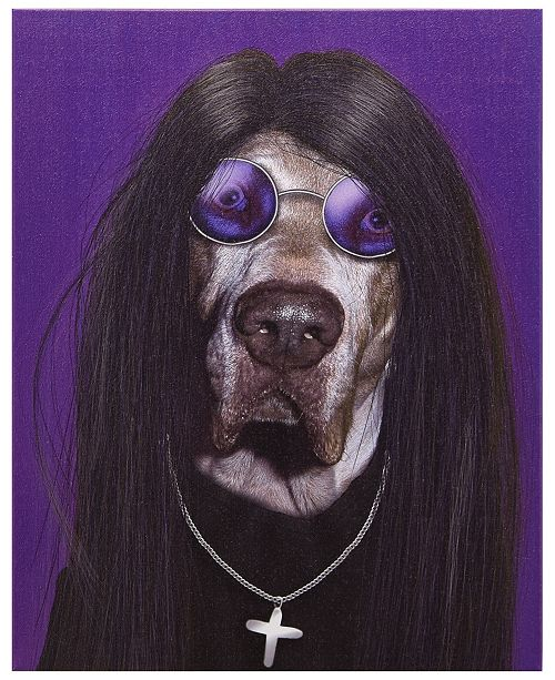 Empire Art Direct Pets Rock 'Metal' Graphic Art on Wrapped Canvas Wall Art - 20'' x 16''